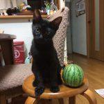 黒猫とスイカ