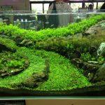 筑波実験植物園 水草展