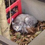 ノラ猫の出産