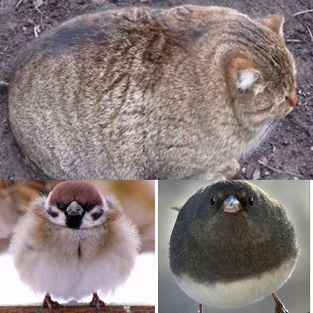 冬毛の鳥って可愛いね!