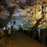 牛久シャトー桜まつりの夜桜