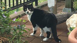 うちの庭にかわいい猫がいた!
