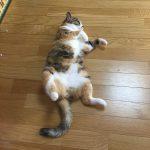 猫のしちみ